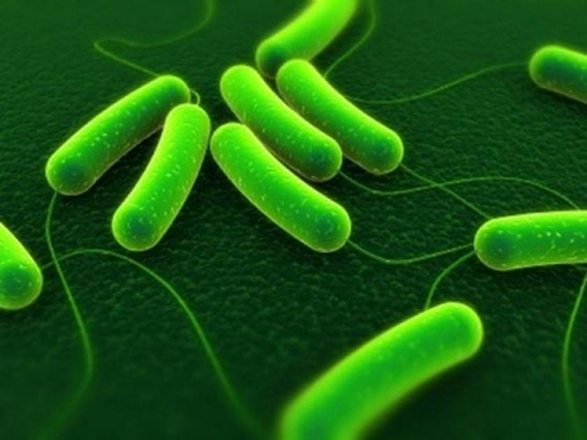 mikrobia